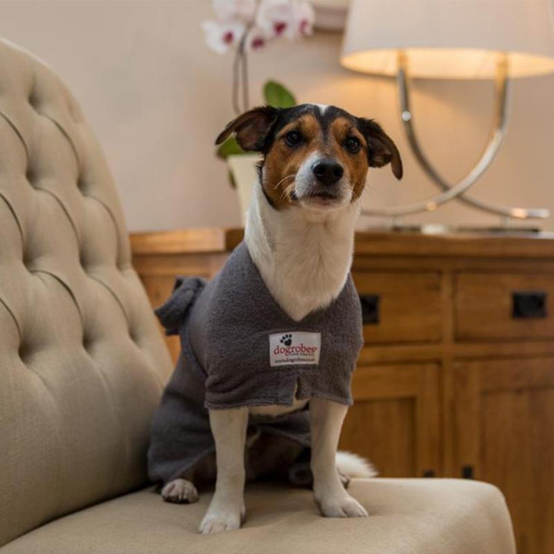 Jack Russell Wearing Grey Dogrobe