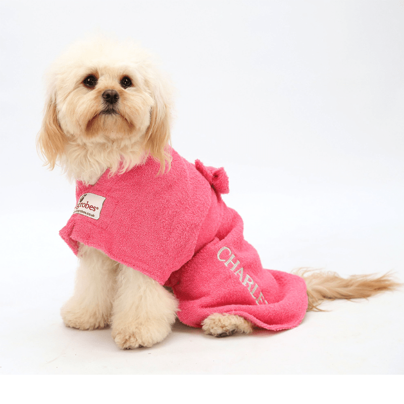 Cavapoo Wearing Pink Dogrobe