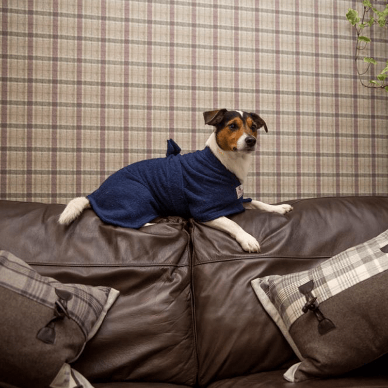 Jack Russell Wearing Navy Dogrobe