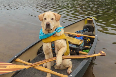 How to Canoe and Kayak with Your Dog