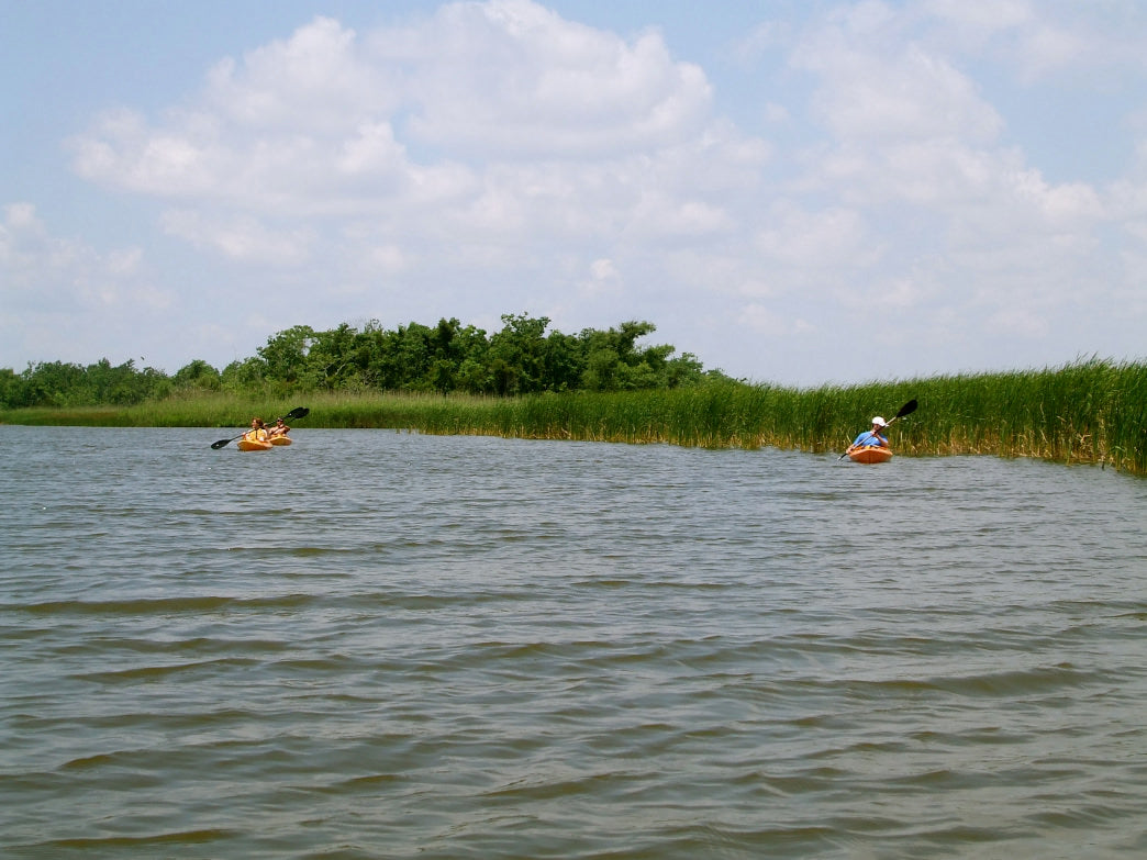 Paddling the Mobile-Tensaw Delta