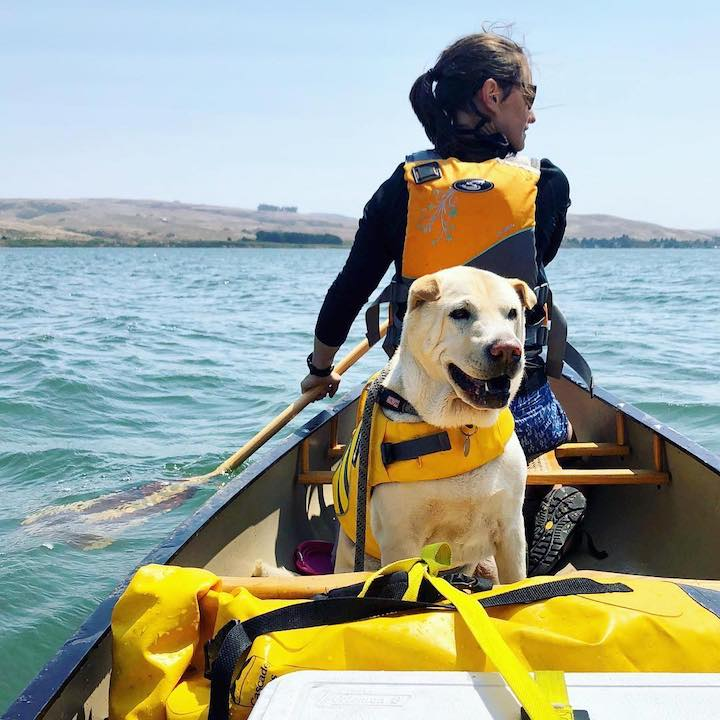 canoe camping with your dog