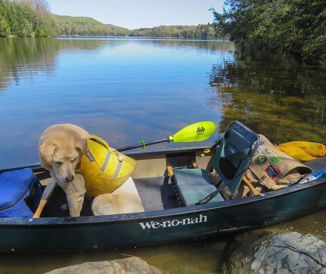 dog ready for canoe camping