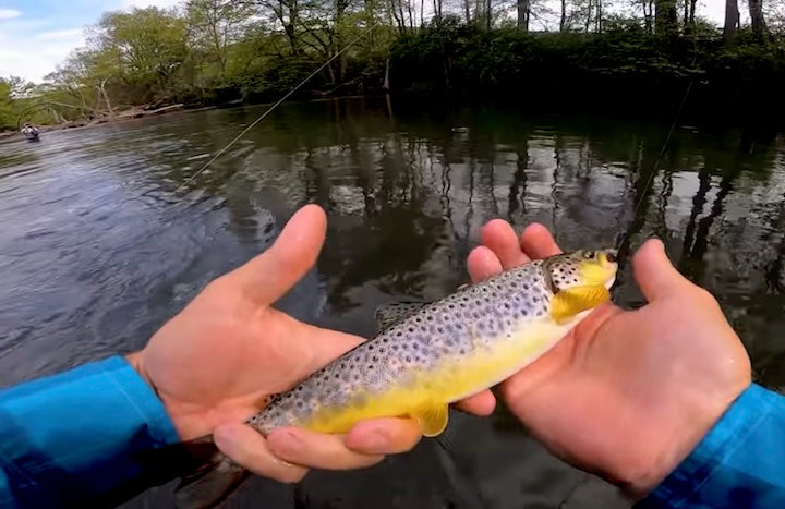 river fly fishing trout