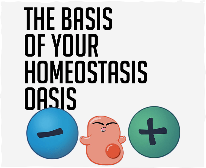The Basis of Your Homeostasis Oasis