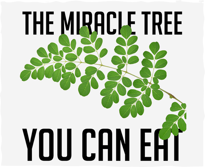 Moringa: The Miracle Tree You Can Eat