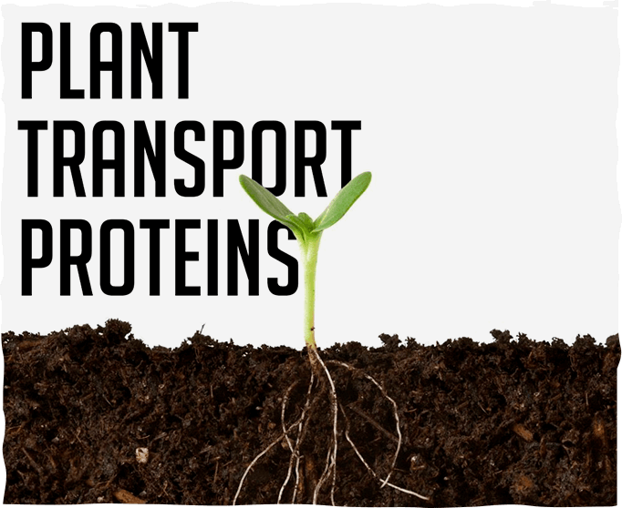 Plant Transport Proteins: Stand and Deliver