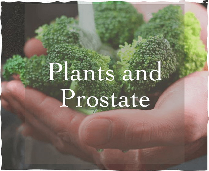Plants and Prostate: More Than Just Alliteration