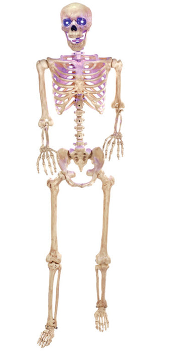 Seasons W81215 Skeleton Lighted Halloween Decoration