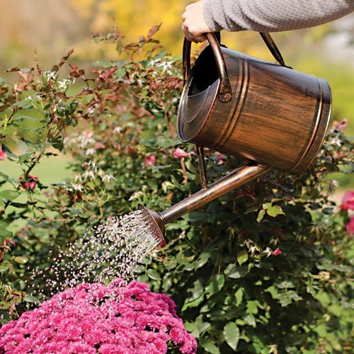 buy watering cans at cheap rate in bulk. wholesale & retail lawn care supplies store.