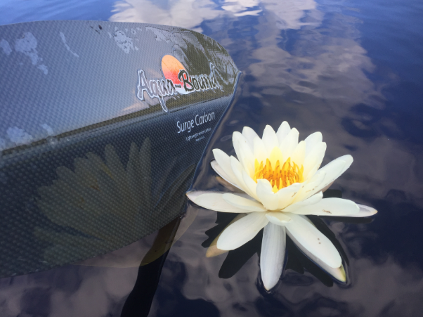 Surge Carbon and Water Lily