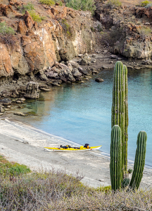 kayak and cactus