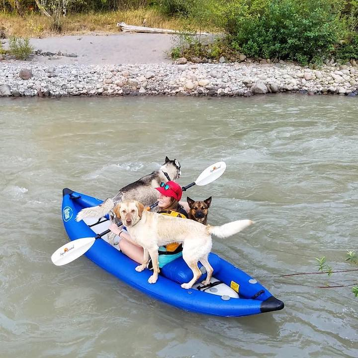 inflatable kayak with dogs