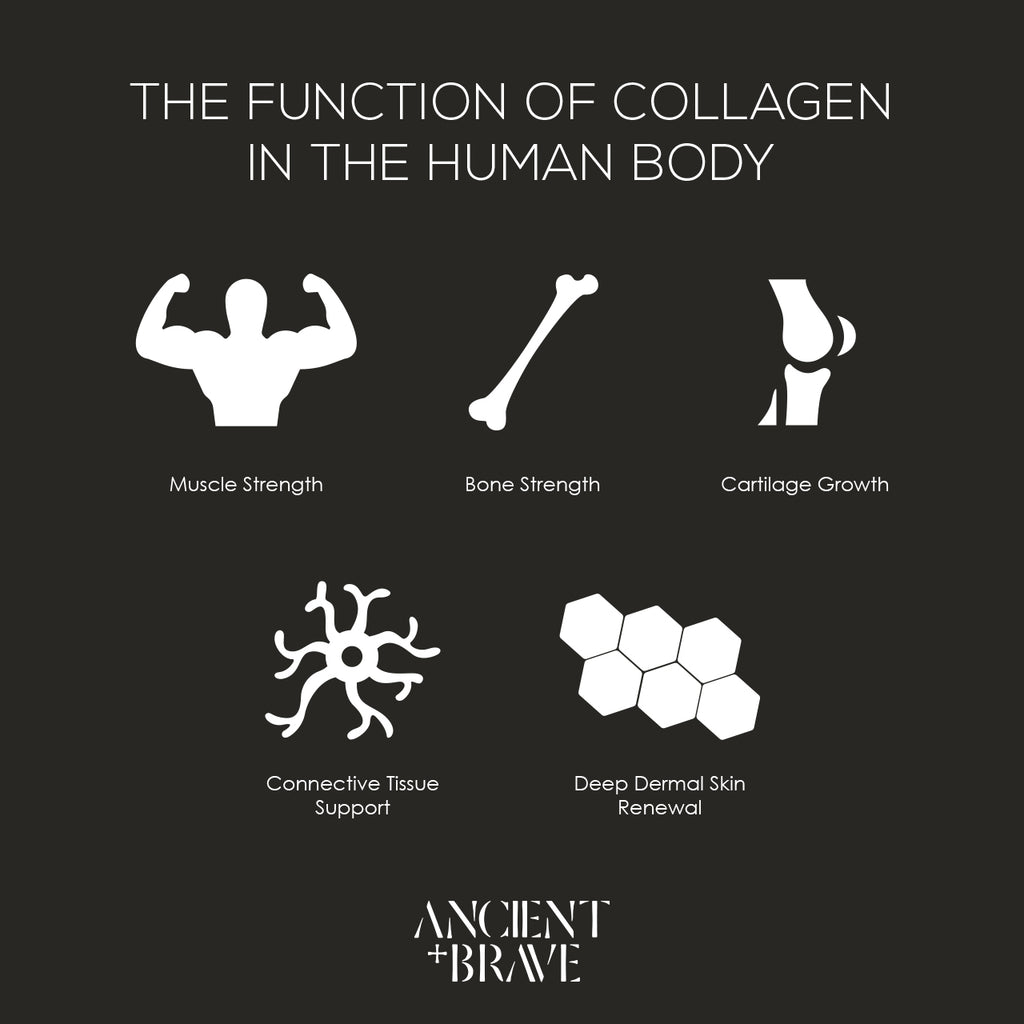 The Function and Benefits of Collagen in the Human Body