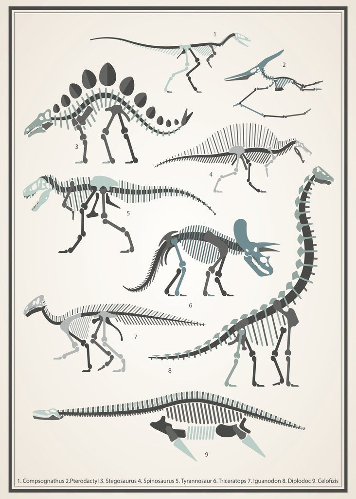 Dinosaur Skeletons Wall Decal