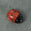 Ladybug Zuni Spirit Fetish Carving in Apple Coral and Jet by Georgette Lunasee | Whisperingtree.net