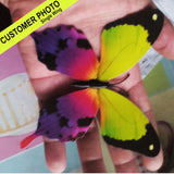 3D Butterflies For Wall | Double Wings | Indoor/Outdoor | FREE SHIPPING!