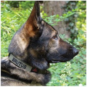 United States Tactical Dog Collar with COBRA Buckle