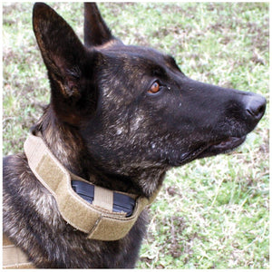US Tactical Dog Receiver Collar with COBRA Buckle