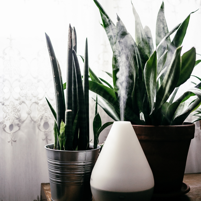 6 Pure Essential Oils Every Home Should Have for Their Diffuser
