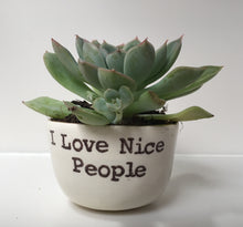 Planters for succulents from I Love Nice People!