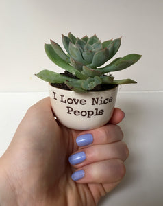Succulent holder from I Love Nice People!