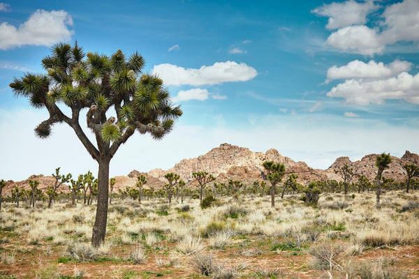 Preserving the Magic of the Mojave: The Inspiration Behind Our Latest Color Collection