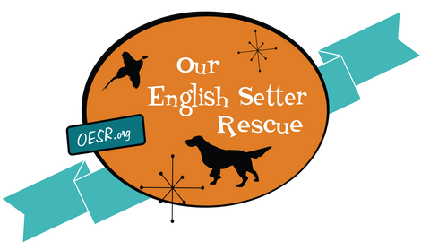 Our English Setter Rescue Shop the Dog Store