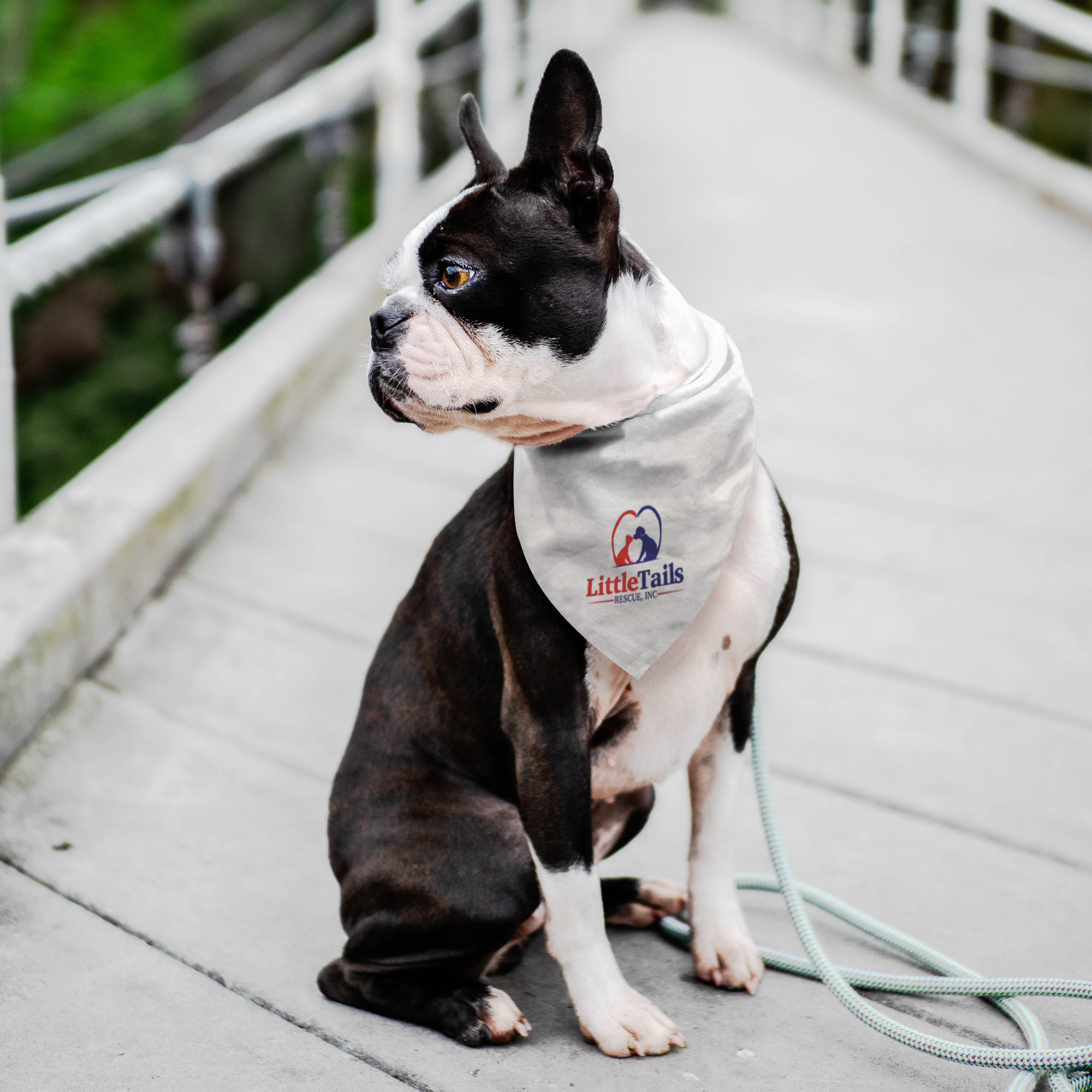 Little Tails Rescue, Inc - Pet Bandana