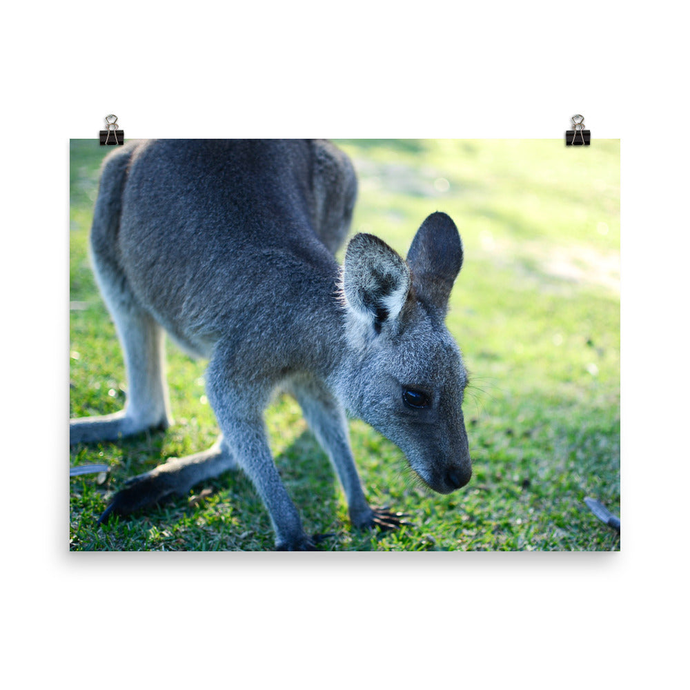 Wallabee, Pebbly Beach | Australien