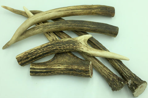 Deer Antler - Small
