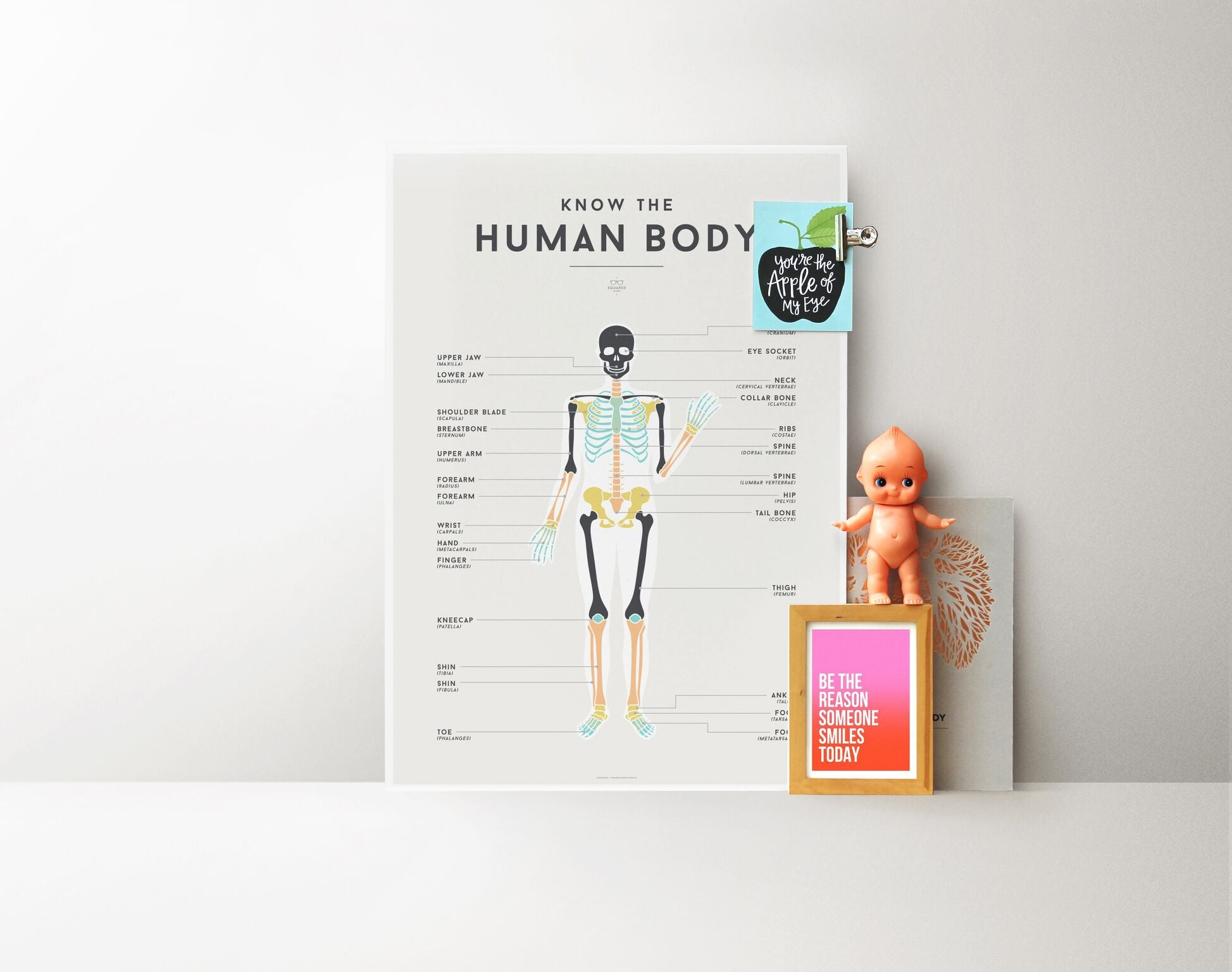 Human Body Chart The Bendy Beanstalk