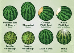 Pick The Perfect Watermelons This Summer