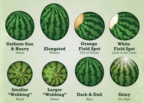 Pick the perfect watermelon every time with this chart