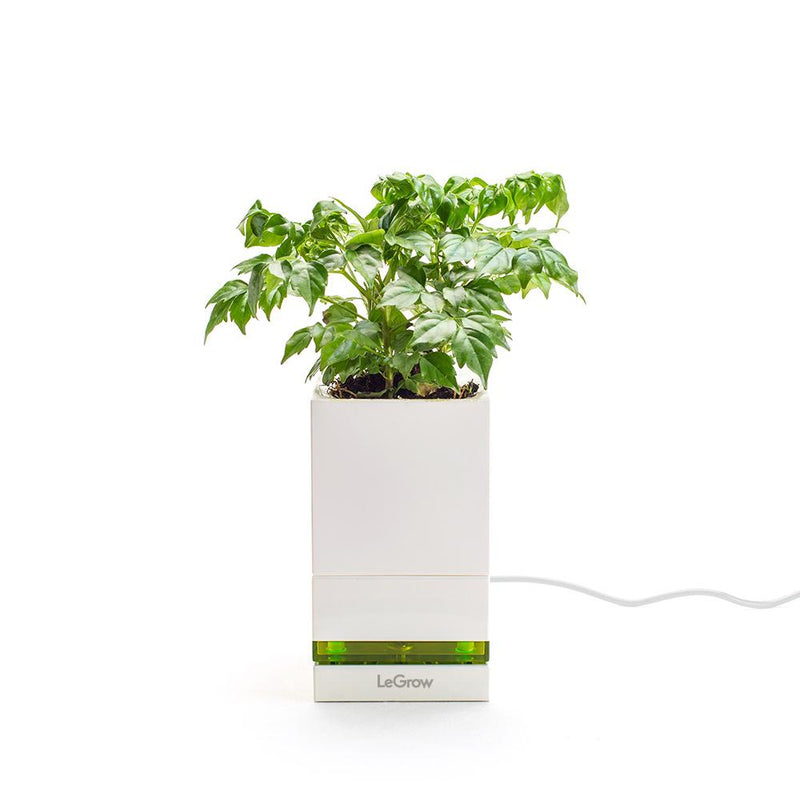 LeGrow |Quick Charging Pot| - Allocacoc Europe Online Store