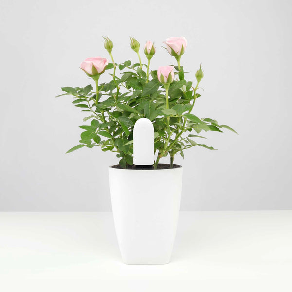 Flower Care™ Smart Monitor