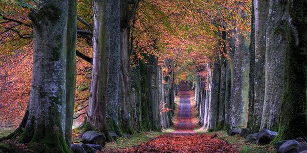 Walk outside autumn red leaves on long path anxiety relief