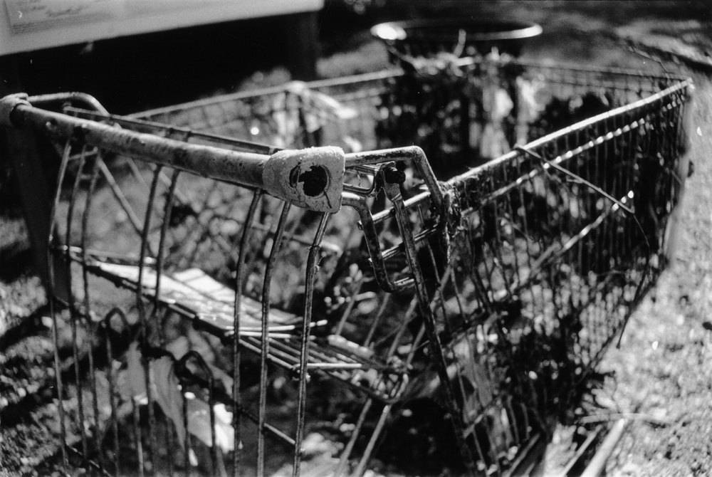 Shopping Carts of the Wild, Photo Magnet