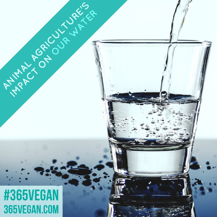Animal agriculture and it's impact on our water