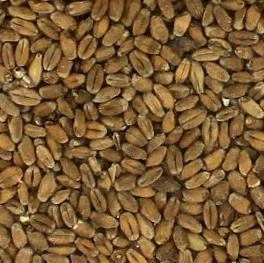 Briess Red Wheat Malt - Per Pound