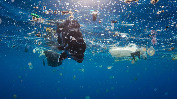 Three Must-See Documentaries About Plastic Pollution
