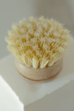 Dish Brush - White Teakwood & Agave Fiber with Replaceable Head