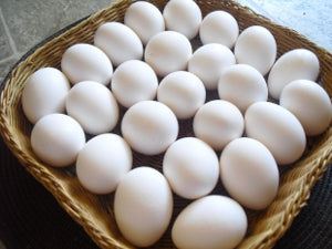 FREE RANGE Eggs - 12 pck  **** deliveries : GTA only ****
