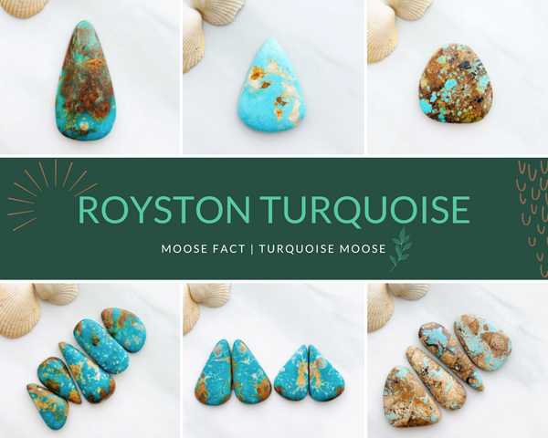 Moose Fact: Getting To Know Royston Turquoise