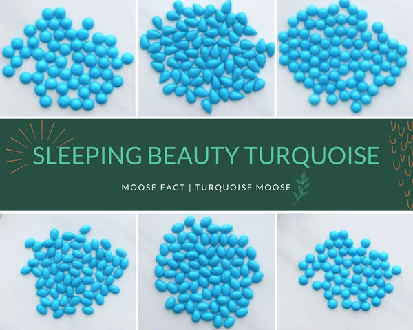 Moose Fact: Getting To Know Sleeping Beauty Turquoise