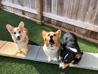 DAYCARE: FUN DOG - 5 pack