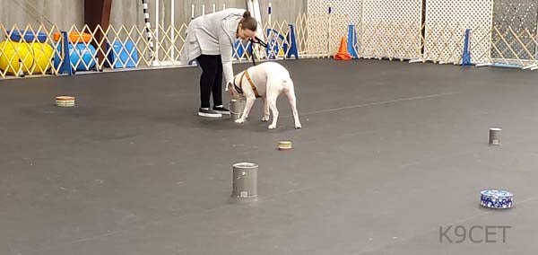 502 - Continuing Nose Work ( K9 Nose Work® Level 2) - Instructor: Jennifer Ackley