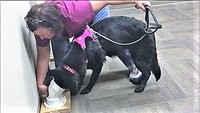 503 - Intro to Odor ( K9 Nose Work® Level 3) - Instructor: Jennifer Ackley