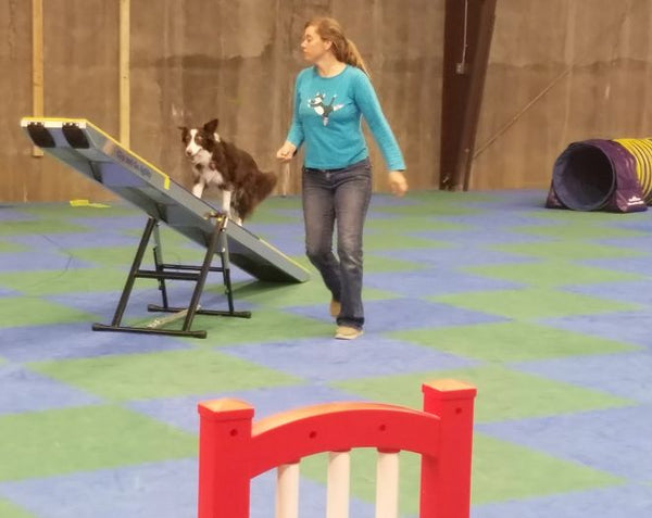 402 - Agility 2 Drop-Ins - Instructors: Ace Russell, Susie Stout