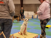 401 - Agility 1 Drop-Ins - Instructors: Ace Russell, Susie Stout